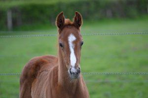 Photos des foals de l'année