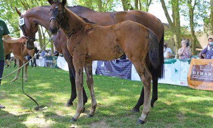 LUNEDEMIEL Sivola, 2nde au Sprinter Sacré Show Foals PS Femelles